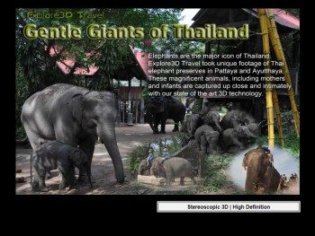 al-caudullo-productions-thailand-gentle-giants-of-thailand-elephants