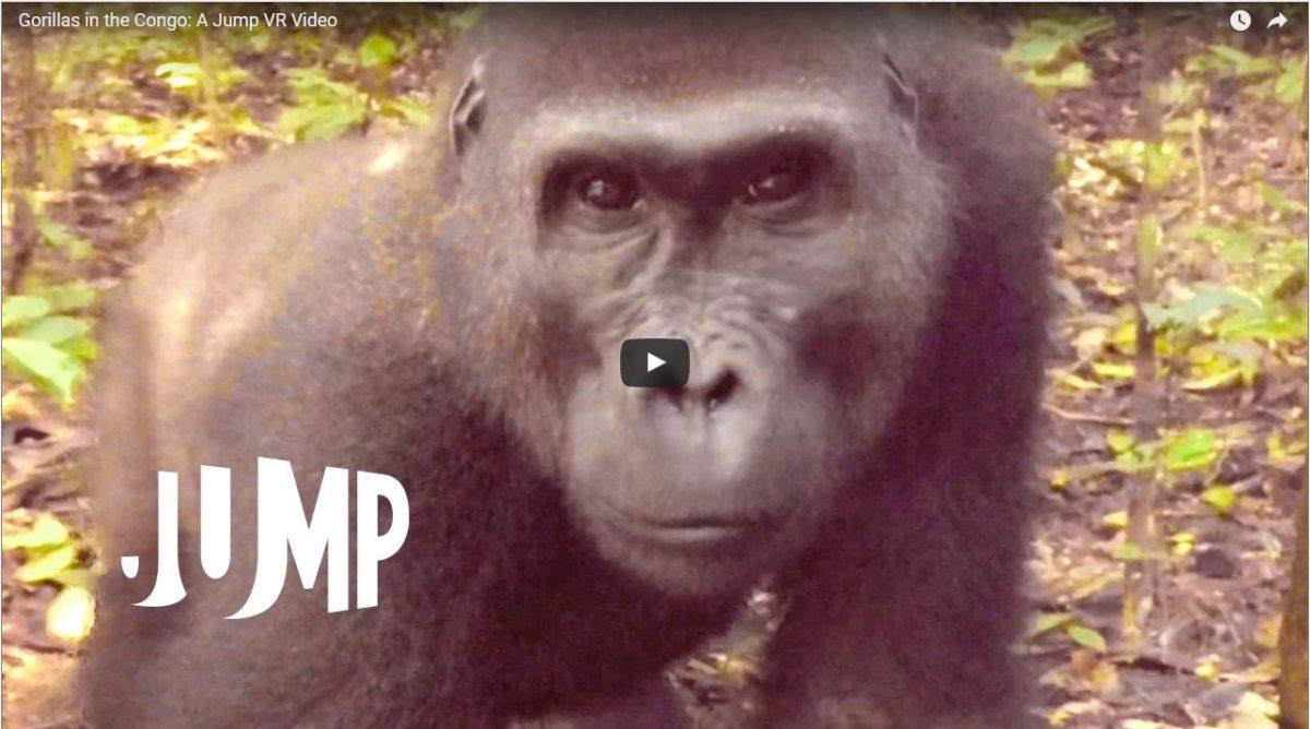 Gorillas-in-the-congo-360